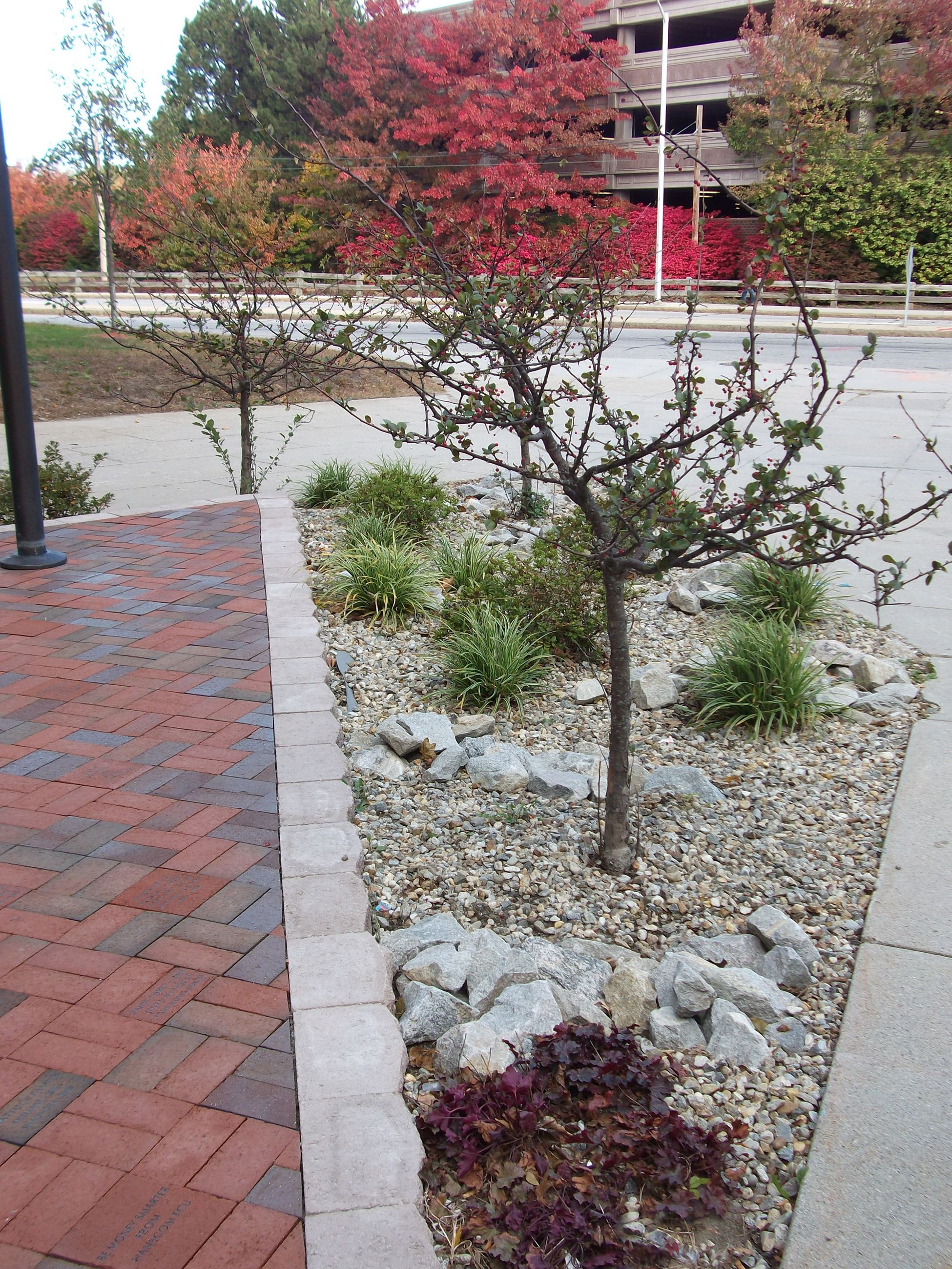 Rock Rain Garden at Lowell High School